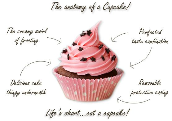 anatomy-of-a-cupcake 2